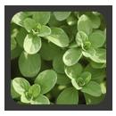 כנסים והרצאות - תבלינים ירוקים